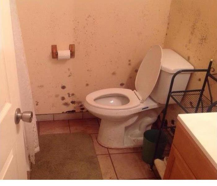bathroom with toilet and black mold on the walls