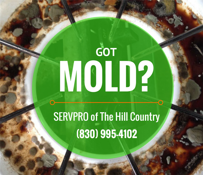 Mold Remediation Mold Remediation Should Not Be A DIY Project