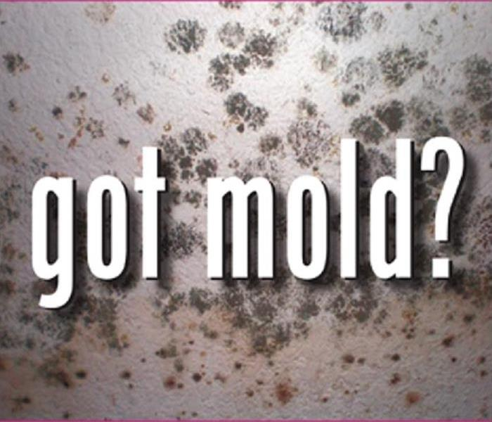 Mold Remediation Four Steps To Successful Mold Remediation