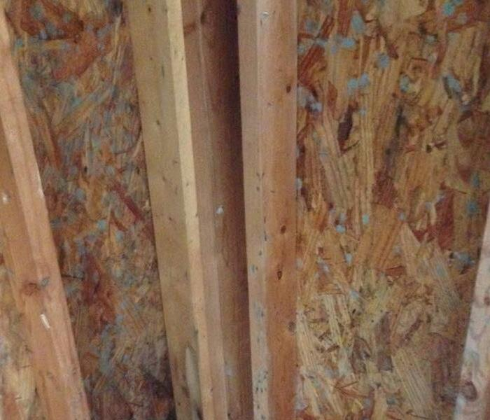 Mold Remediation Mold Growths Found in Fredericksburg Home